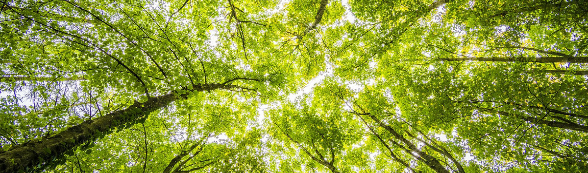 Forêt domaniale de Loches