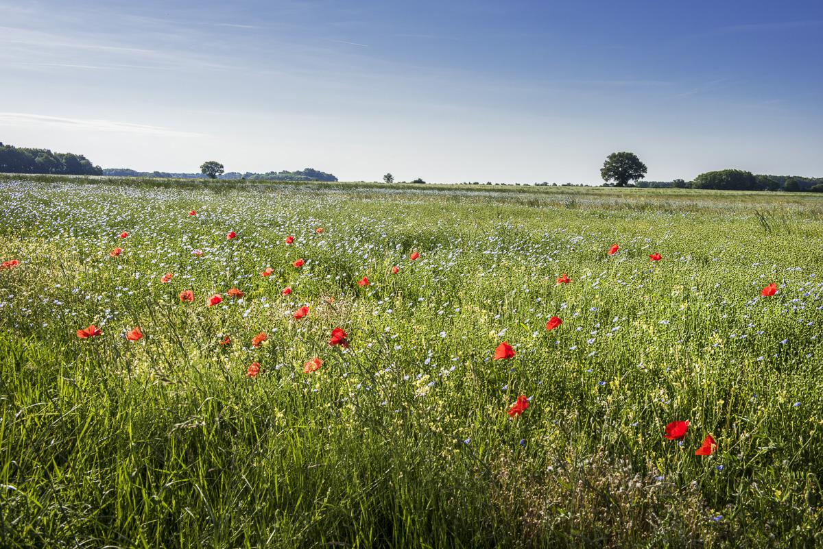Nouvelle voie verte en Sud Touraine