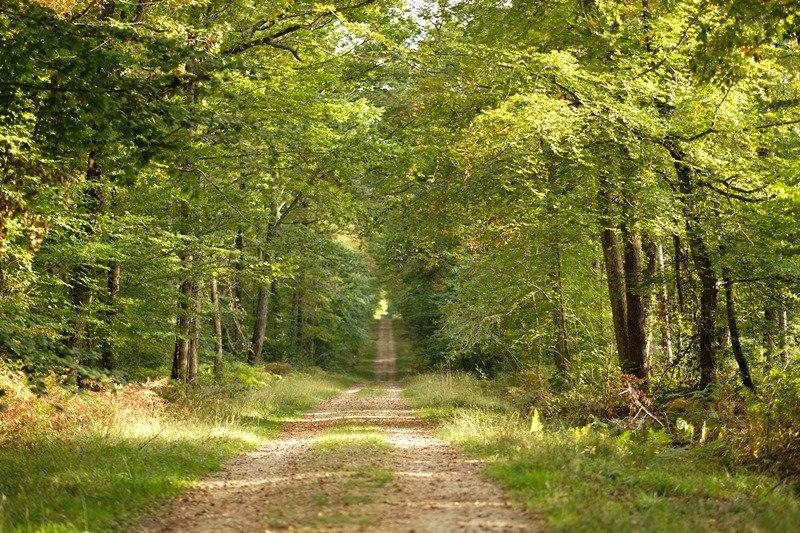Grande Forêt de Loches